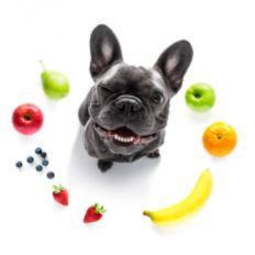 welk fruit mag een hond