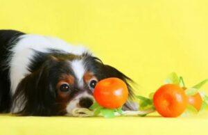 hond en mandarijn